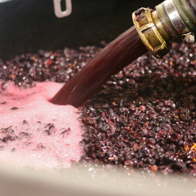 Les Remontages de nos Pinots Noirs à Sancerre